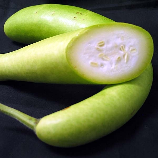 how to grow bottle gourd plant