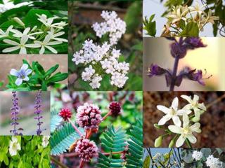 Flower Power on LustrousHenna.com –by L.J. O'Neal, writer.