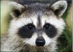 Raccoon Eyes Got You Down? Vanish Dark Circles –by L.J. O'Neal, writer.