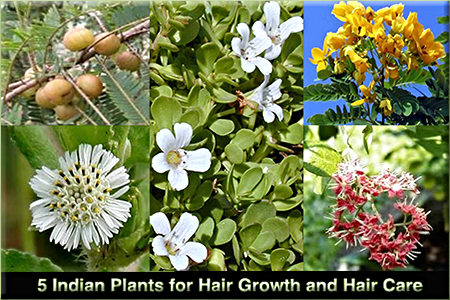 5 Indian Plants for Hair Growth and Healthy Hair Care –by L.J. O'Neal, writer.