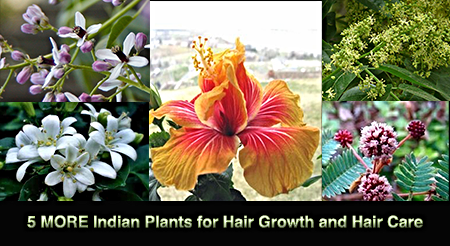 5 MORE Indian Plants for Hair Growth and Healthy Hair Care –by L.J. O'Neal, writer.